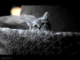 Самая милая реклама про котят
